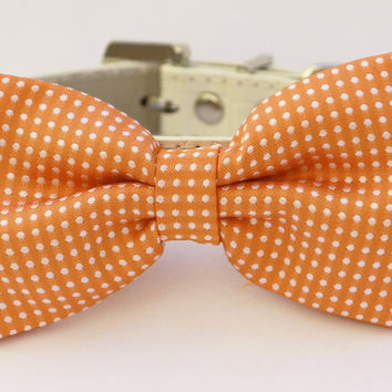 Polka dots Orange Dog Bow Tie with leather collar, cute gift, polka dots wedding