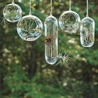 Shane Powers Hanging Glass Bubble Collection | west elm