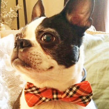 Plaid Orange and Black Dog Bow tie attached to Black leather collar, cute Dog Bow tie, Dog lovers