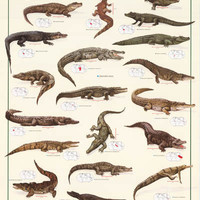 Crocodiles and Alligators Education Poster 27x39