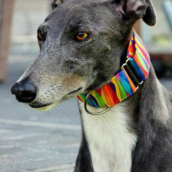 Martingale Collar - Candy Land, 2 inch martingale collar, 1.5 inch martingale collar, italian greyhound collar, whippet collar, greyhound