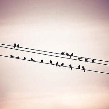 nature photography birds on wire fine art 11x14 12x18 16x24 vintage sunset lilac violet birds on wire wall art home decor large prints