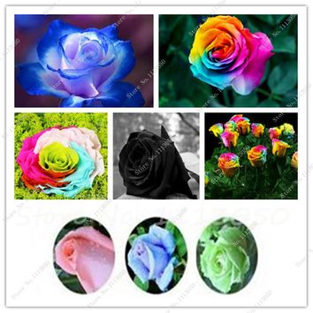 Free shipping 50 Seeds Rare Holland Rainbow Rose seeds Indoor Bonsai Flowers Seeds Lover colorful Home Garden Plants