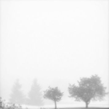 zen tree photo, tree photograph, nature photo, minimalist, landscape photo, fog, foggy, trees, modern art, Ontario, pale, pastel, zen, white