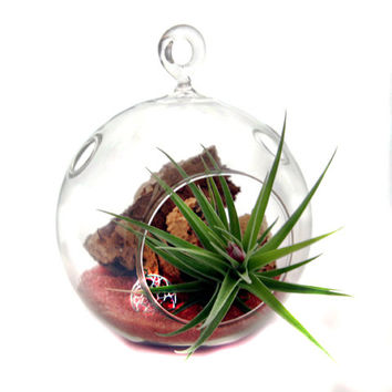 Air Plant Terrarium - Sedona Cliffs and Sands