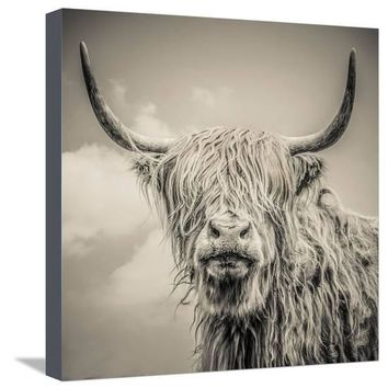 Highland Cattle Premium Photographic Print by Mark Gemmell at Art.com