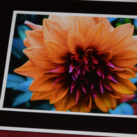 Colorful Single Flower Photography Art Print, Black border cardboard easel frame included