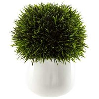 Green Potted Podocarpus | Hobby Lobby | 737536