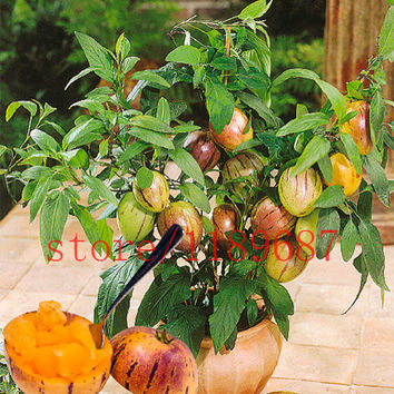 100 mini sweet melon seeds Melon Tree  Non GMO-Organic Fruit and vegetable seeds for DIY home garden
