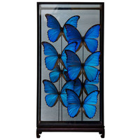 Large Butterfly Showcase