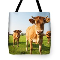"""Four limousine cows on meadow. Tote Bag for Sale by Jan Brons (18"""" x 18"""")"""