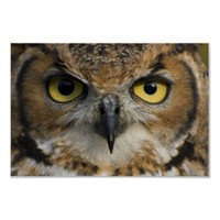 Owl Eyes Poster from Zazzle.com