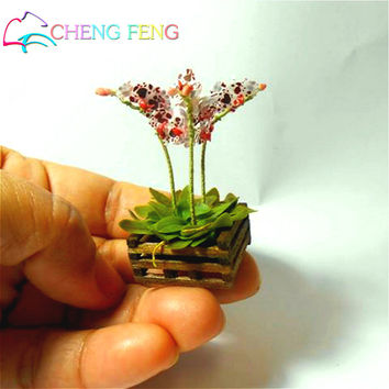 100 Pcs Seeds Mini Bonsai Orchid Seeds Indoor Home Miniature Flower Pot Garden Plants Four Seasons Beauty 2016 Rare Flowers Gift