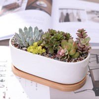 (1 Set) Minimalist White Ceramic Succulent Planter (1 Pot + 1 Tray)