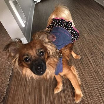 Pet DOG APPAREL Clothes Costume Dress Denim Tutu Skirt XS S M L XL For wedding Hot Sale
