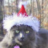Santa Cat Hat - Christmas Cat or Dog Hat