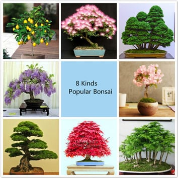 Potted plant seeds 8 kinds Bonsai Tree Seeds 227Pcs Popular Plant Seeds Perfect DIY Home Garden Bonsai package
