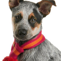 Chilled to the Bone Dog Scarf in Pink | Mod Retro Vintage Pet Accessories | ModCloth.com
