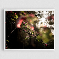 Flower tree, Nature Photography, Street Photography, Beautiful Sunset, Spring, Pink flowers, Beautiful Lighting, bokeh background, poster