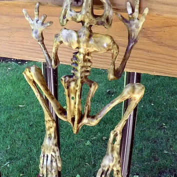 Frog Skeleton, Halloween Prop, Horror Decor, Corpsed Bones, Latex Decoration, Creepy Stuff, Dead Creature, Rotting Animal