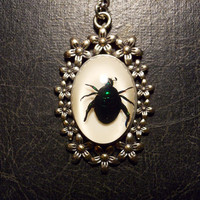 Spring Blue Green Jewel Beetle Preserved  Specimen in Resin Cameo