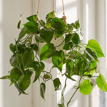 Beaded Hanging Planter - Urban Outfitters