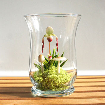 Miniature Lady Slipper Orchid Terrarium by Miss Moss Gifts