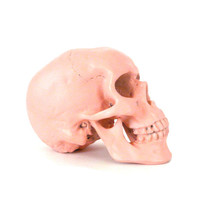 skull head coral pink grunge home decor flesh skulls by nashpop