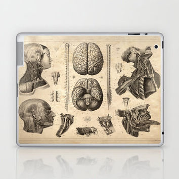 Vintage Anatomy. Nervous System. Brains poster. Human Body.  Laptop & iPad Skin by Curious Prints