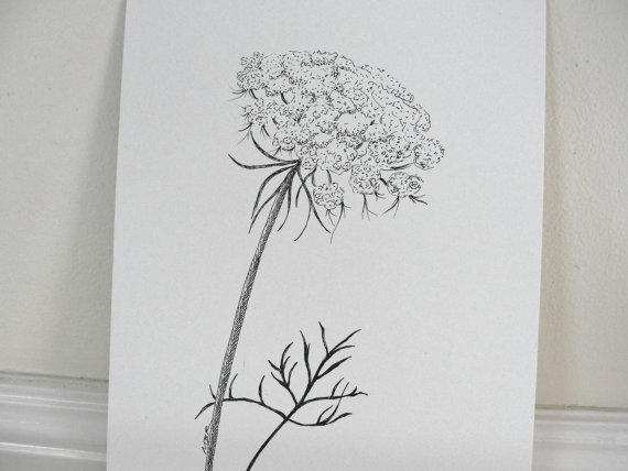 Lace Flowers Drawings Original Ink Drawing Queen