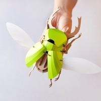 Model Stag Beetle DIY Kit