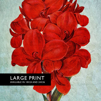 Amaryllis decor art Flower botanical Amaryllis print kitchen decor Floral Amaryllis print wall decor floral wall art - Large Giclee Canvas