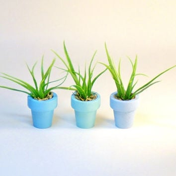 Miniature Wood Pots Artificial Air Plants Fairy Garden Dollhouse Set of Three in Hues of Blue 1 inch diameter