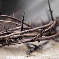 Crown of Thorns fine art photography print