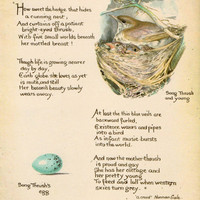 Vintage Bird Art Print. Song Thrush's Egg. In Aqua, Cream, Sepia, Brown. Nest, Baby, Nursery, Shabby Chic, Speckled, Poem. (No. 423)