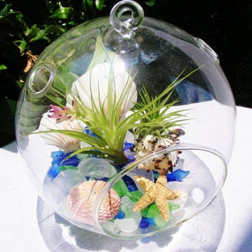 Seaside Terrarium - Large Glass Globe Hanging Terrarium Kit with Stricta Air Plant and tillandsia - Sea Glass filler - Beautiful Sea Shells