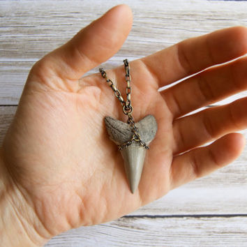 Fossil Shark Tooth Necklace » Gift For Man » Man's Necklace » Men's Necklace » Gifts for Men » Fossilized Shark Tooth » Fossil Necklace