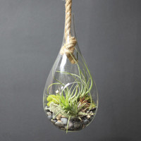 Teardrop Hanging Terrarium with Rope
