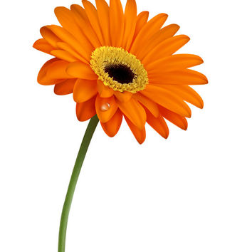 Gerber Daisy Image, Large Flower Image, Flower Image, Orange Daisy Poster, Wall Décor, Kids Room, Nursery Décor, Home Décor