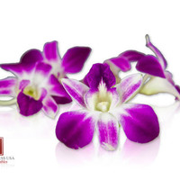 Edible Orchids in Bulk (Karma Orchids) | Marx Foods