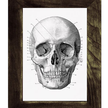 Human skull Print in black - Science prints wall art- Anatomy prints on white paper wall decor.