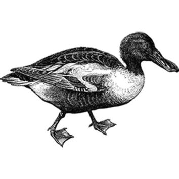 Vintage Duck Illustration (Black) Plastisol Heat Transfer