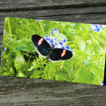 Butterfly magnet, photo magnet, nature print, insect art, picture magnets, kitchen refrigerator magnet, wildlife photography, kitchen decor