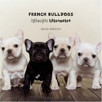 French Bulldogs: Lightweights Littermates
