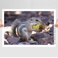 Desert squirrel Wildlife Photography/ OPEN EDITION prints / Desert wildlife and Harris ground squirrel Photography / purple, yellow, gray