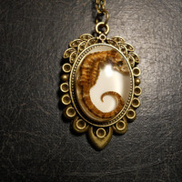 REAL Preserved Seahorse Specimen in Resin Cameo Necklace
