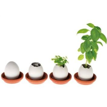 'Easter Eggling' Grow Your Own Plant Kit