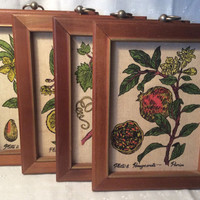 Vintage 1960s Ardco Fruit and Nut Prints, Kitsch Decor, Fruit Prints, Wall Art