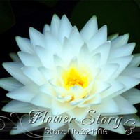 FREE SHIPPING 5 SEED White  Lotus Flower Seeds .DIY home garden White Nymphaea