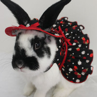 Strawberries and cream matching harness mini dress and hat for your bunny . Made to order